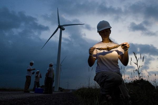 aus dem Beitrag Wind farms vs wildlife