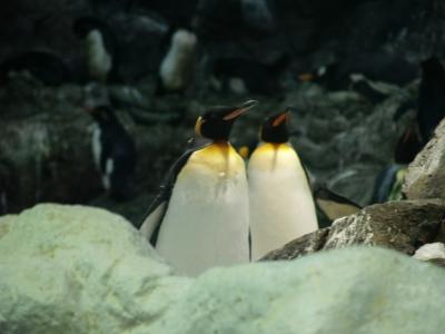 pinguine_teaser