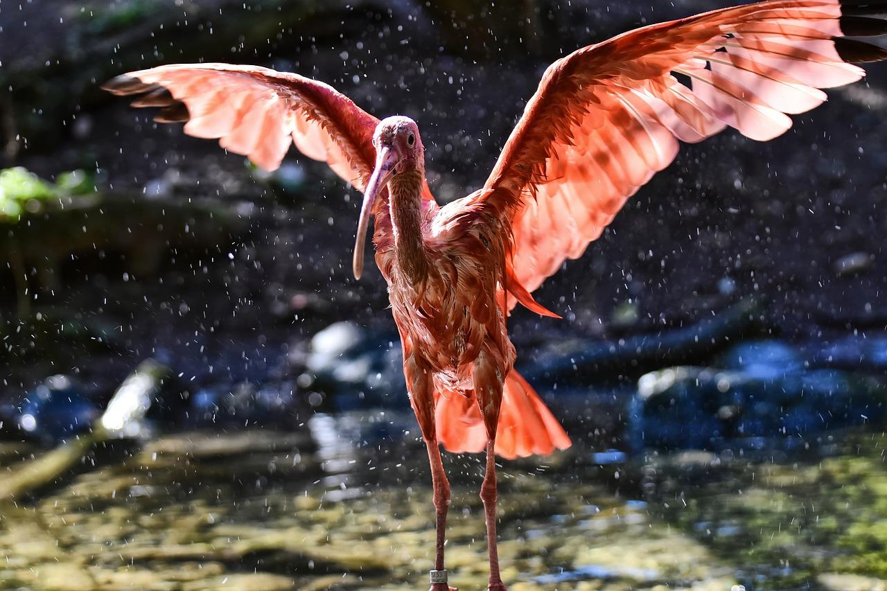 ibis-3809147_1280