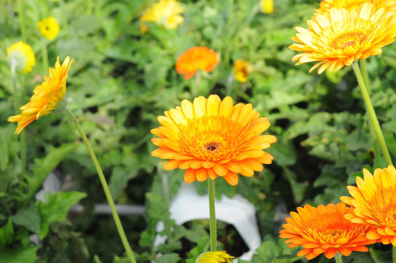 flower-2110696_1280